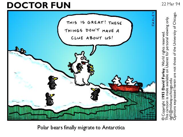 the null device items for tags polar bears